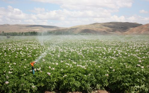 Pipelife-sprinkler-in-crops